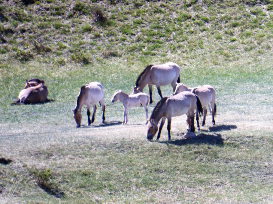 Tahki Horses