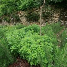 Villa Herb Garden Oregano