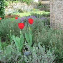 Villa Herb Garden Tulips